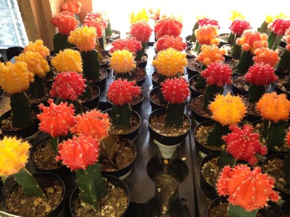 home-depot-cactus.jpg
